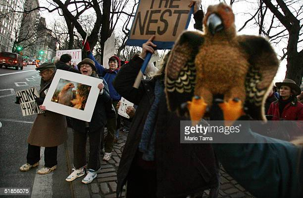 Protesters chant outside the building where famous redtailed hawk Pale Male had his nest removed by building management last week December 13 2004 in...