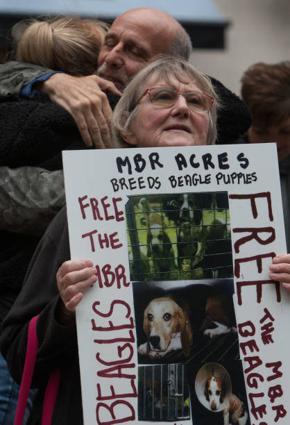 GBR: Activists From Camp Beagle Protest Against Vivisection