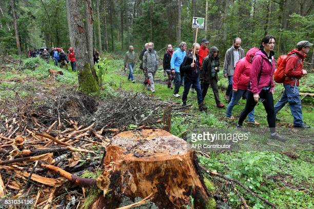 Protesters hold up a sign reading I love primeval as they attend a protest against the cutting of trees in the Bialowieza Forest in Stara Bialowieza...