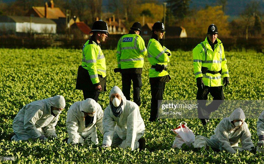 Anti-GM Crop Protest, Long Marsden, England : News Photo