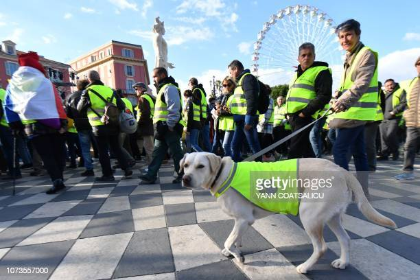 Protestors and a dog wear a Yellow vest during a protest against rising oil prices and living costs in Nice southeastern France on December 15 2018...