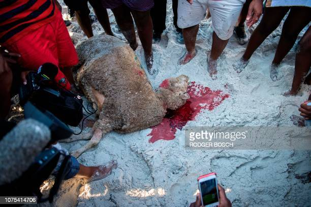 Protestors from different political groups slaughter a sheep on Clifton beach on December 28 in Cape Town in a supposed ritual to tackle racism after...