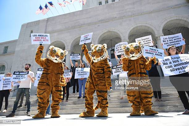 Protestors with PETA gather at City Hall to call on Los Angeles to expand the bullhook ban and prohibit the use and abuse of tigers lions and other...