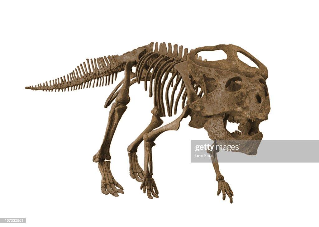 Protoceratops : Stock Photo