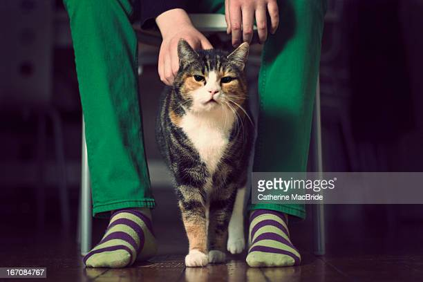 proud calico cat - catherine macbride stock pictures, royalty-free photos & images