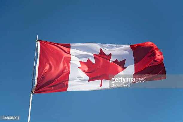proud canadian flag - canadian flag stock pictures, royalty-free photos & images