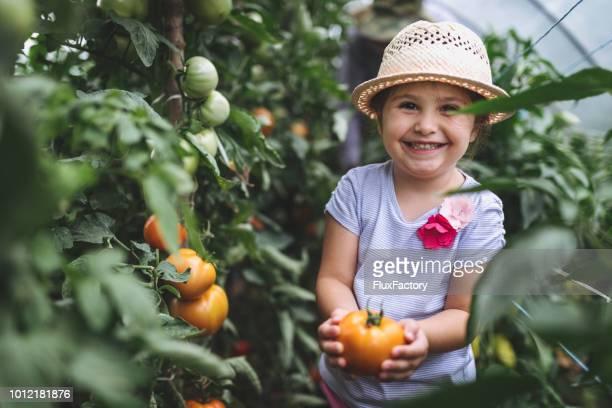 彼女の最初の成長したトマトを保持している誇りに思っている子 - 整形式庭園 ストックフォトと画像