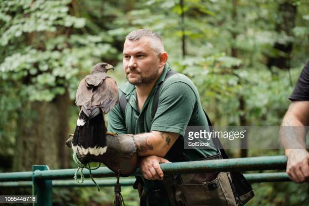 Proud Falconer with a Harris Hawk