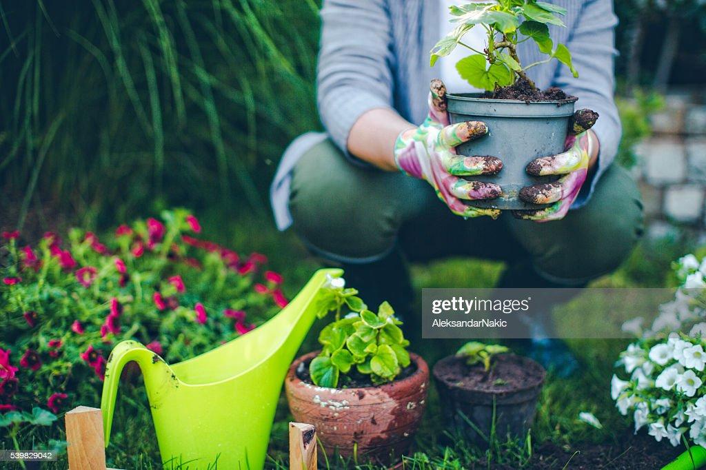 Proud gardener : Stock Photo