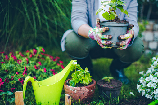 Proud gardener 539829042