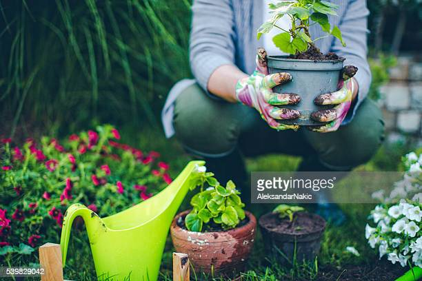 proud gardener - pot plant stock pictures, royalty-free photos & images