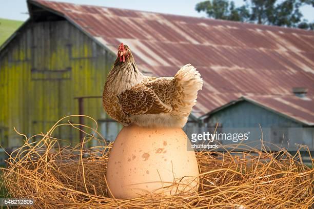 Proud hen sitting on her egg