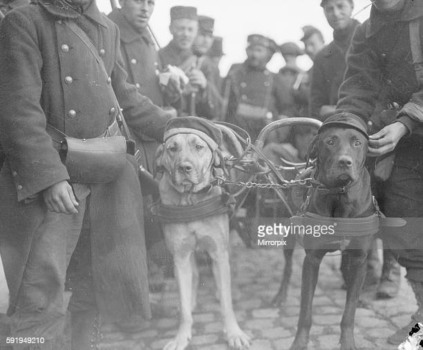 Proud of his war trophy The Belgian soldiers are devoted to the dogs who are employed to pull machine guns and the man who owns this animal is no...