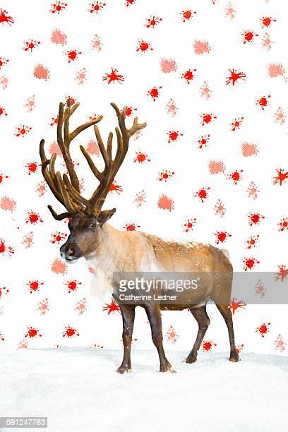Proud Reindeer on Snow and Wallpaper