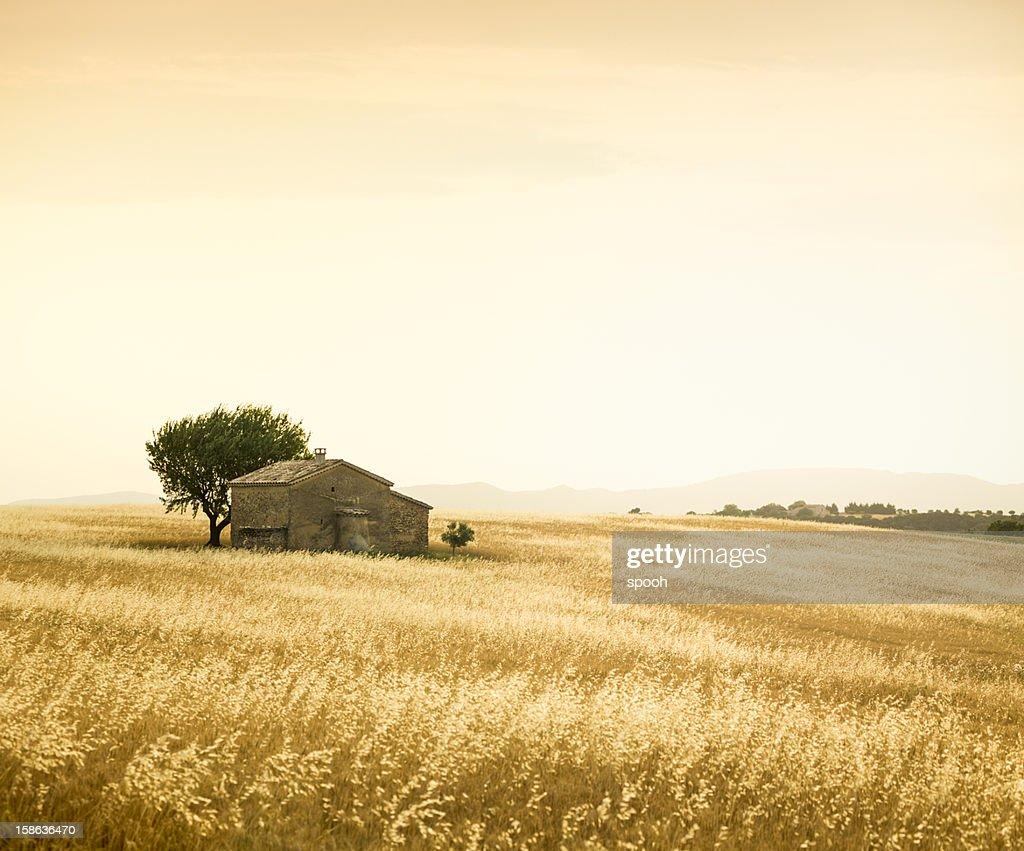Provencal farm : Stock Photo