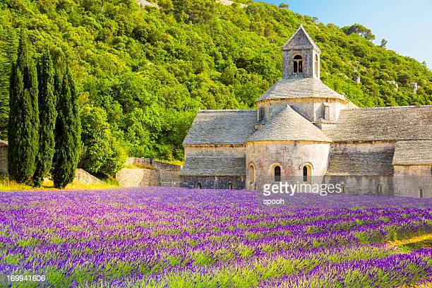provence, france - lavender plant stock pictures, royalty-free photos & images