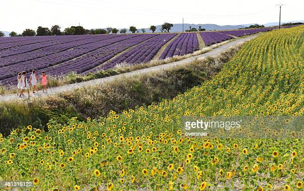 provence - plateau de valensole stock photos and pictures
