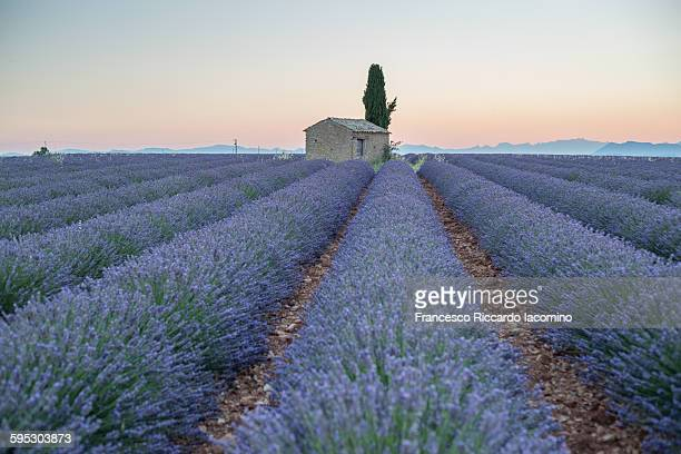 Provence, scent of lavender