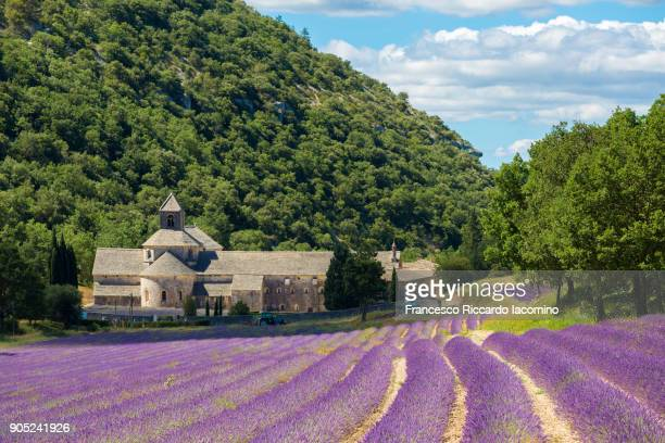 Provence, Senanque Abbey and Lavender field