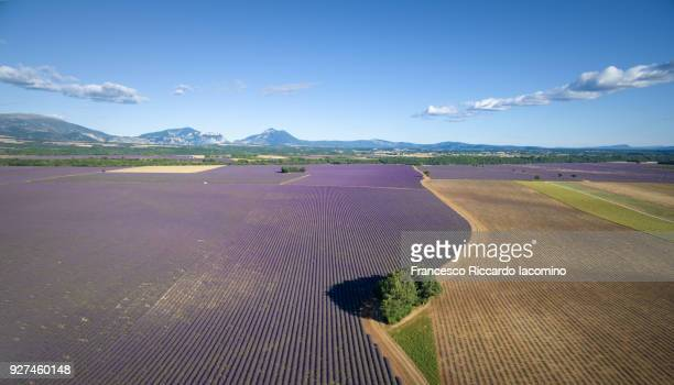 Provence, Valensole Plateau, Lavender field. Aerial View