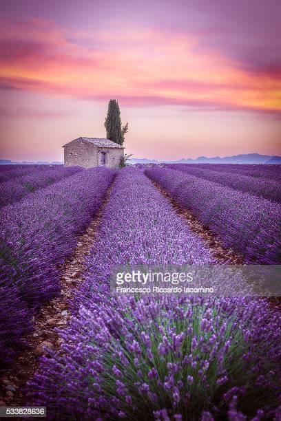 provence, valensole plateau, lavender field - francesco riccardo iacomino france foto e immagini stock