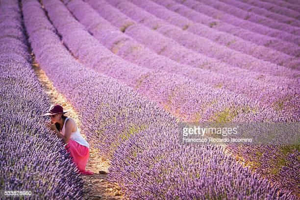 Provence, Valensole Plateau, Lavender field