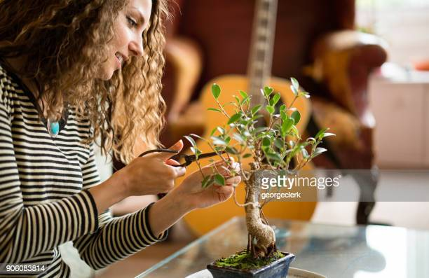 pruning an indoor bonsai tree at home - bonsai tree stock pictures, royalty-free photos & images