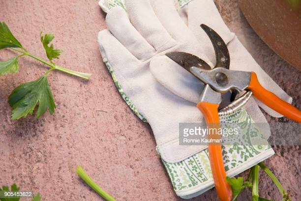 pruning shears and gardening gloves - pruning shears stock photos and pictures