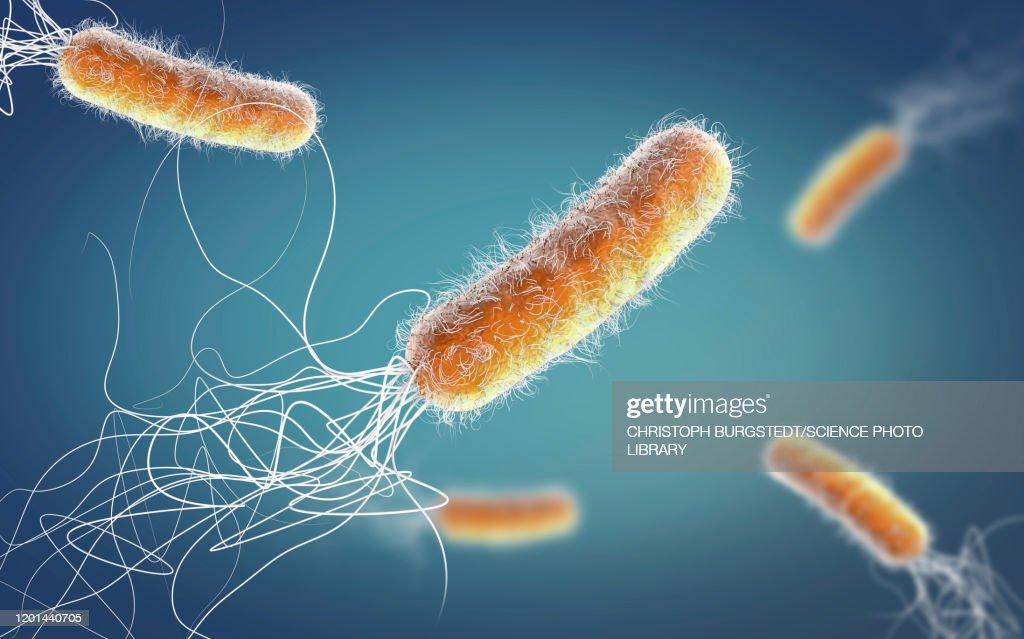 Pseudomonas aeruginosa bacteria, illustration : Stock Photo