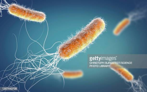 pseudomonas aeruginosa bacteria, illustration - cultures stock pictures, royalty-free photos & images