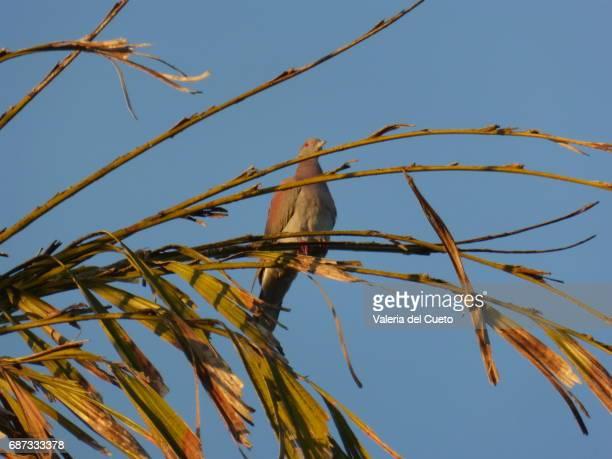 pássaro no galho - sem fim... valéria del cueto stock pictures, royalty-free photos & images