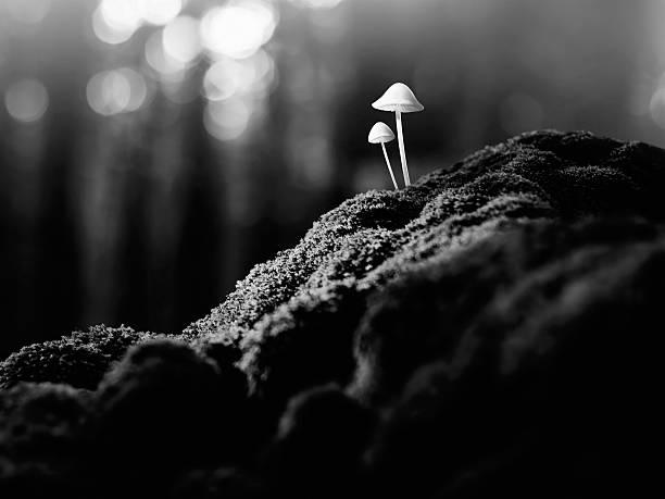 Psychedelic Mushrooms Wall Art
