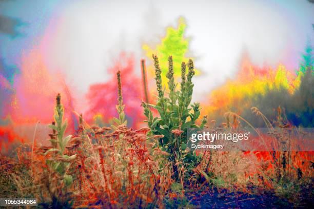 psychedelic plant scene in foggy woodland environment - niet gecultiveerd stockfoto's en -beelden
