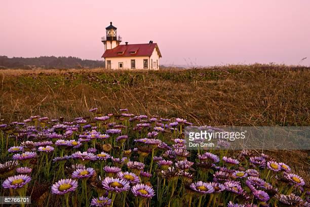 pt. cabrillo lighhouse and sea daisies - don smith imagens e fotografias de stock