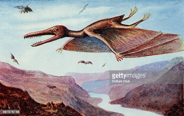Pterodactyl After artist drawing Caption reads 'The latest of these creatures of which we have any knowledge had wings with a total expanse of...