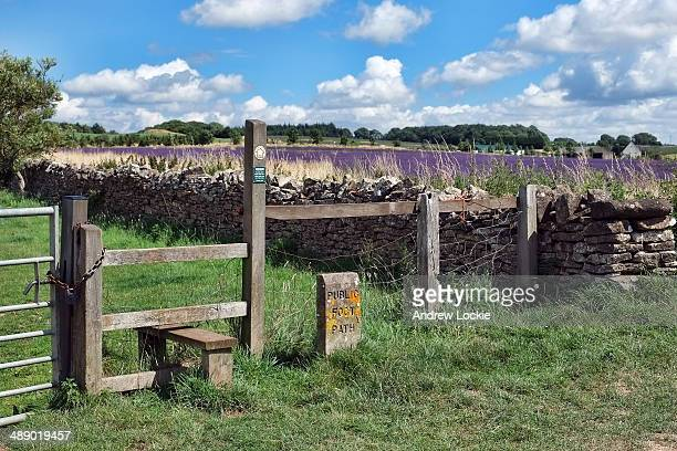 Public footpath alongside lavender fields in the Cotswolds, near the village of Snowshill on the edge of the escarpment. The Cotswold Lavender Farm...