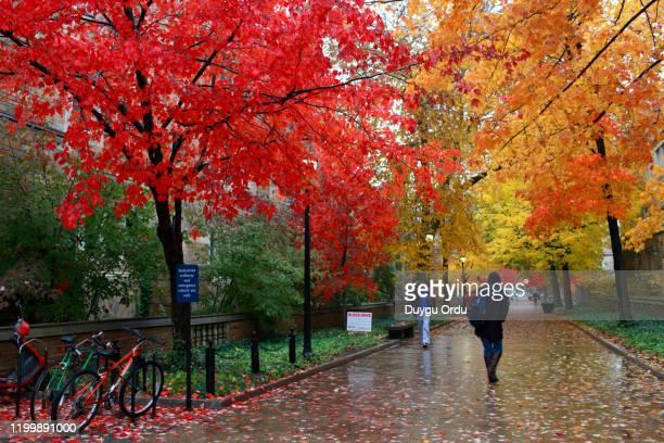 public park in autumn - オータムインターナショナル ストックフォトと画像