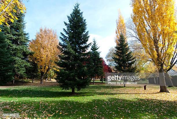 Public park trees in Autumn