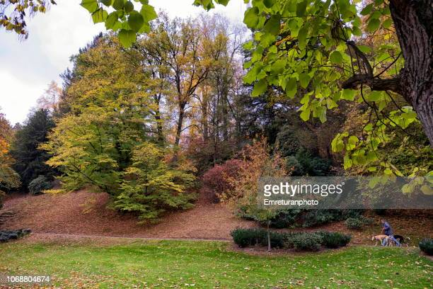 public park with autumn colors,baden-baden. - emreturanphoto stock pictures, royalty-free photos & images