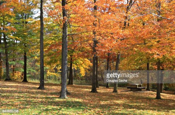 Public picnic area during the autumn season