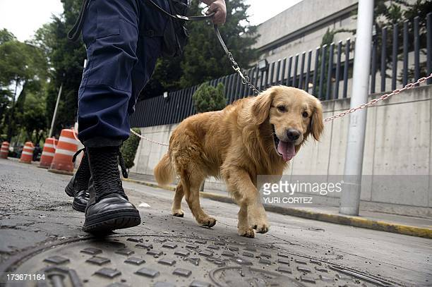 A Public Security member patrols with a sniffer dog the surroundings of the Deputy Attorney Specialized in Investigation of Organized Crime...