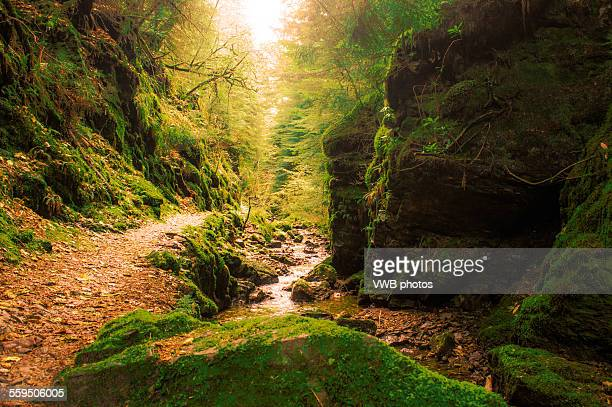pucks glen, cowal peninsula, argyll and bute - scottish culture stock pictures, royalty-free photos & images