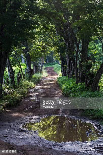 puddles of water in the forest - península de nicoya fotografías e imágenes de stock