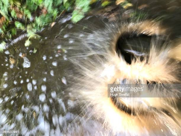 puddles - hugh threlfall stock pictures, royalty-free photos & images