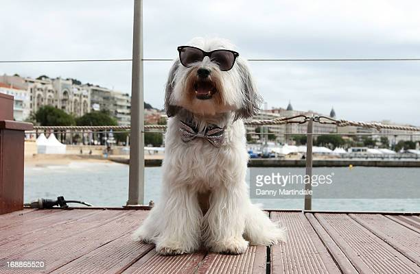 Pudsey the dog attends the photocall for 'PudseyThe Movie' at The 66th Annual Cannes Film Festival on May 16 2013 in Cannes France
