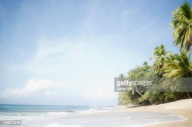 USA, Puerto Rico, Ricon, Tropical beach