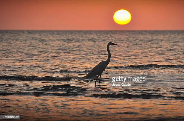 Puesta de sol con garza (Isla de Holbox)