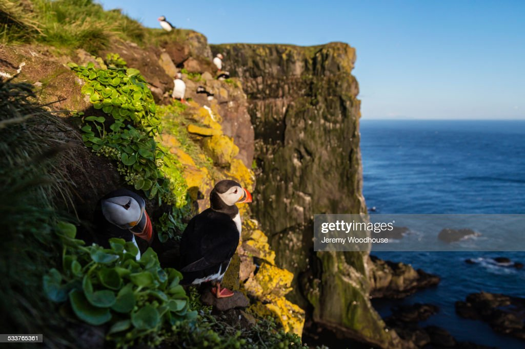 Puffins on rocky cliffs over seascape : Foto stock