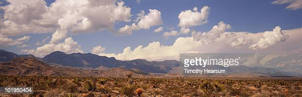 puffy clouds, mountains and desert plants - timothy hearsum stock pictures, royalty-free photos & images