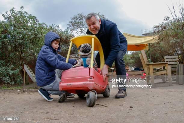 Pug at playground